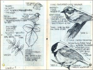 field journal example