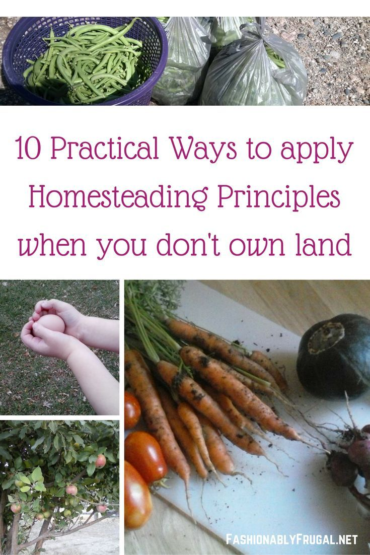 Are you in love with the idea of homesteading but don't have the money or space to have a homestead? 10 practical ways to homestead wherever you live.