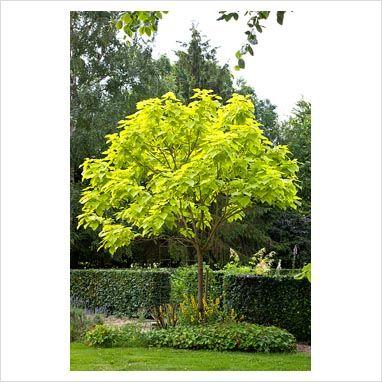 85 best Succulents and drought tolerant plants images on Pinterest