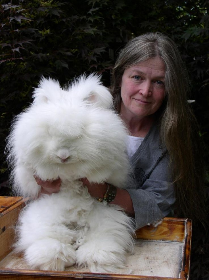 cobblerock ridge all natural fiber farm - BUNNIES for sale at OAK ROOT WARRENCheck out our OAK ROOT WARREN Face Book Page