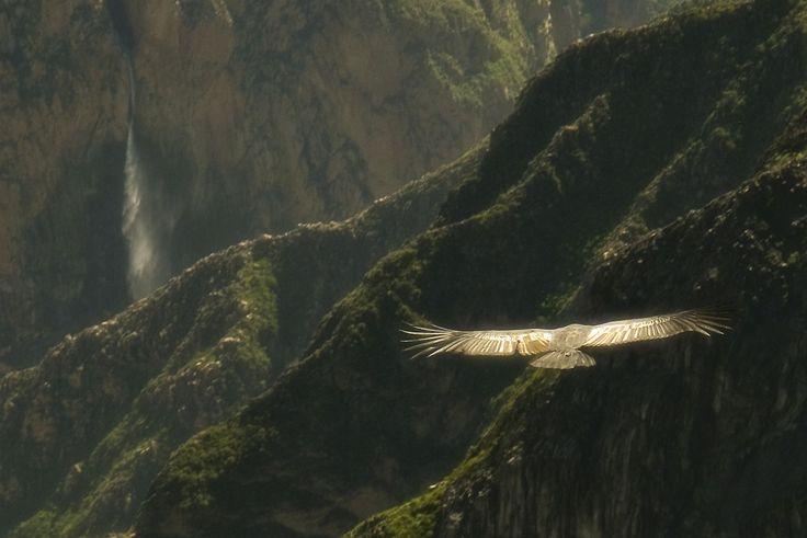The Valle del Colca | Carl Ottersen