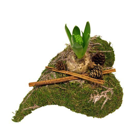 Mosshjärta med hyacint och kanel http://holmsundsblommor.blogspot.se/2014/11/hyacint-i-mosshjarta.html