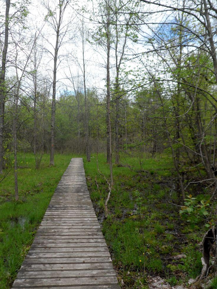 Corridor Trail at Frontenac Provincial Park.