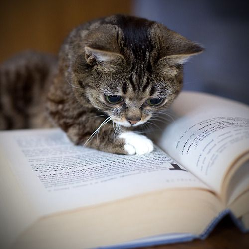 looks like Lil Bub found a good book to read