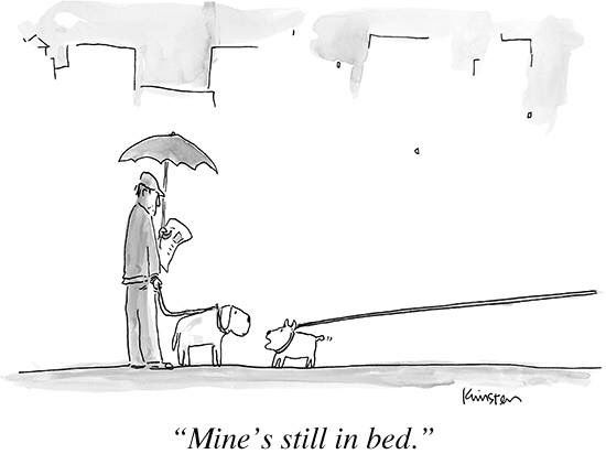 96 Best Images About Favorite New Yorker Cartoons On