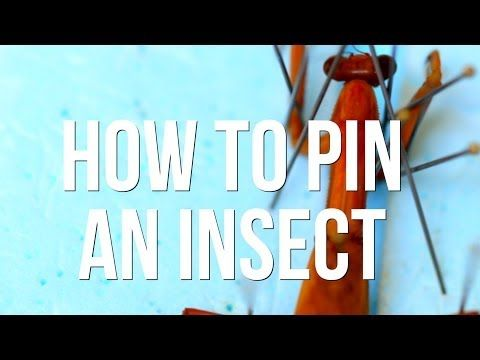 How to Pin an Insect - YouTube