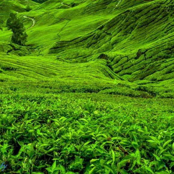 Green Green Rolling Hills | Verde que te quiero verde ...