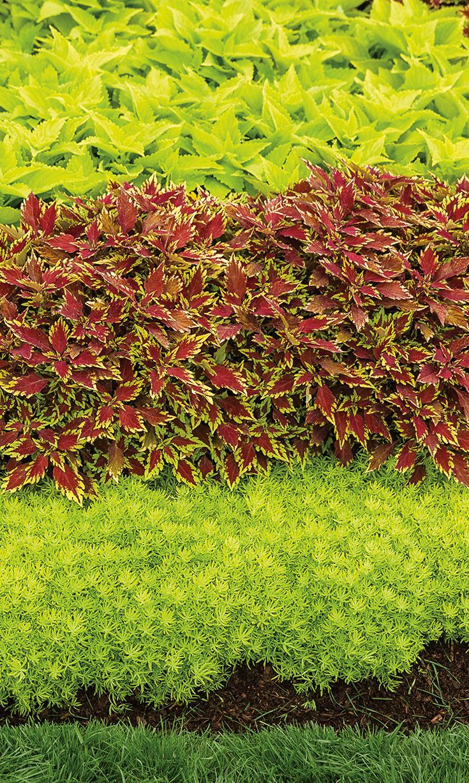 18 best Neighborhood Finds images on Pinterest | Botanical gardens ...