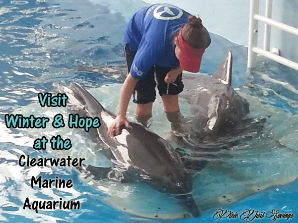 Visit Winter And Hope At The Clearwater Marine Aquarium