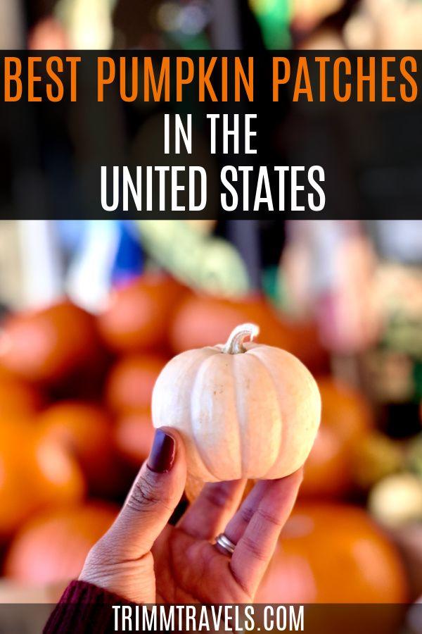 Pumpkin Picking Best Pumpkin Patches In The Usa Trimm Travels In 2020 Best Pumpkin Patches Pumpkin Picking Pumpkin Patch