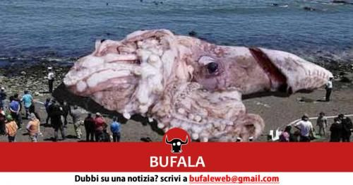 Attualità: #BUFALA #Incredibile #Calamaro Gigante ritrovato stamattina nella spiaggia di Marsala (link: http://ift.tt/2fygfop )