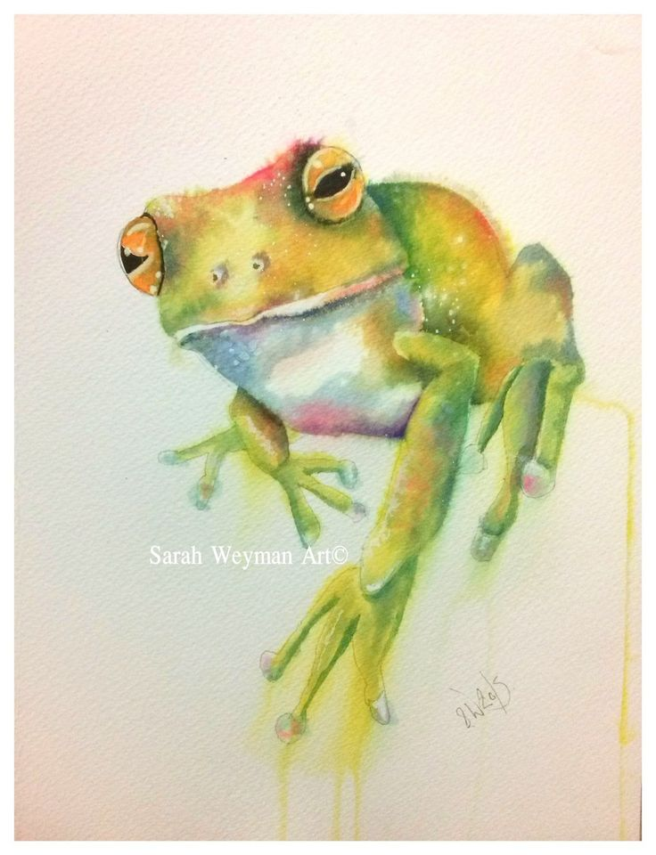 700 best Aquarelles : Grenouilles images on Pinterest | Frogs ...