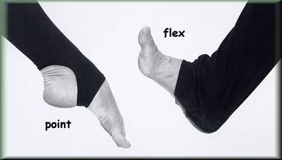 Point en flex