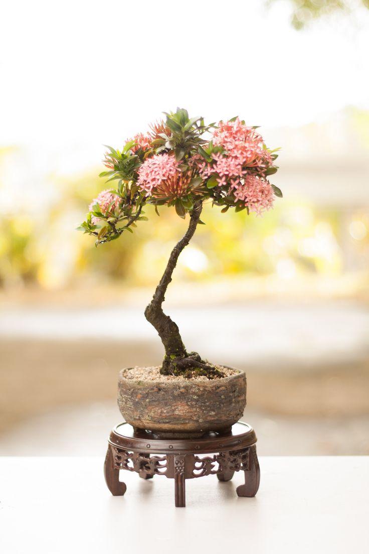 Bonsai Tree 27 Modern Bonsai Poughkeepsie Ideas