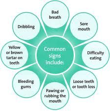 Common signs of gum disease in pets. February is Dental Health Month for pets!