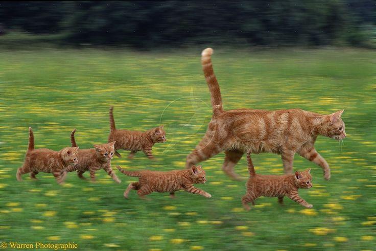 """* * MOM CAT: """" Pick up de pace, runts. De humans just let Rufus outside."""""""