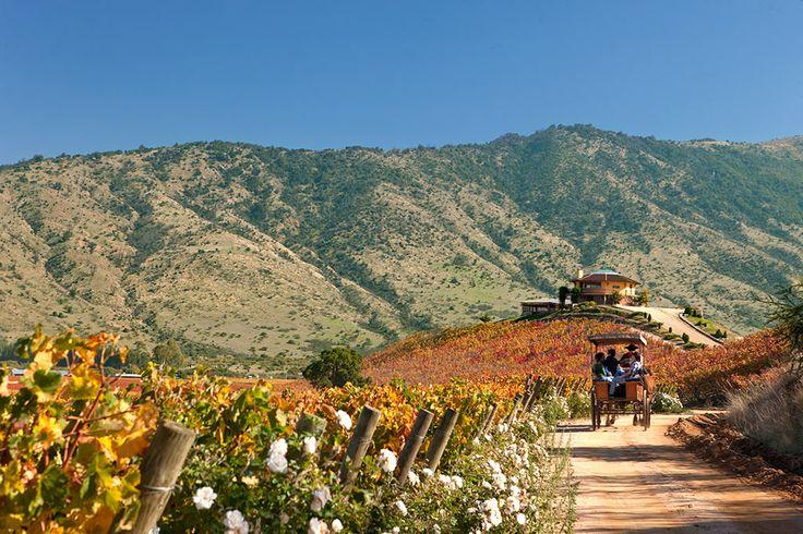 Colchagua Valley - Ruta del Vino Colchagua
