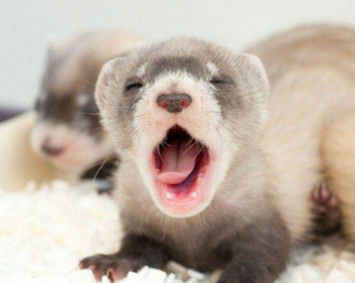 Yawn. - Cute animals world