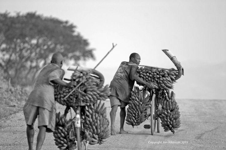 Bananas being taken to market on bicyles Kenya.