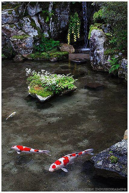 Koi meditation (Jikkou-in 実光院) | Flickr - Photo Sharing!