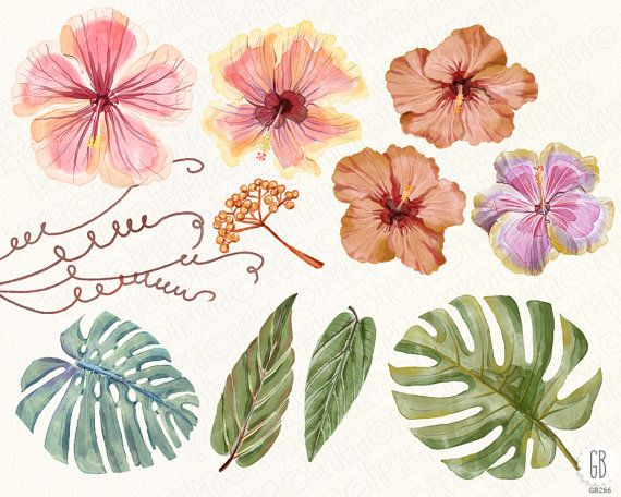 Welcome to GrafikBoutique!  This item includes 14 graphic elements: 5 hibiscus flowers, 2 monstera leaves, other tropical floral element. Total 33