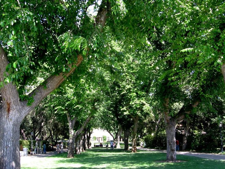 Growing elm trees provides a homeowner with cooling shade and unrivaled beauty for many years to come. You can learn more about planting an elm tree in this article. Learn more here.