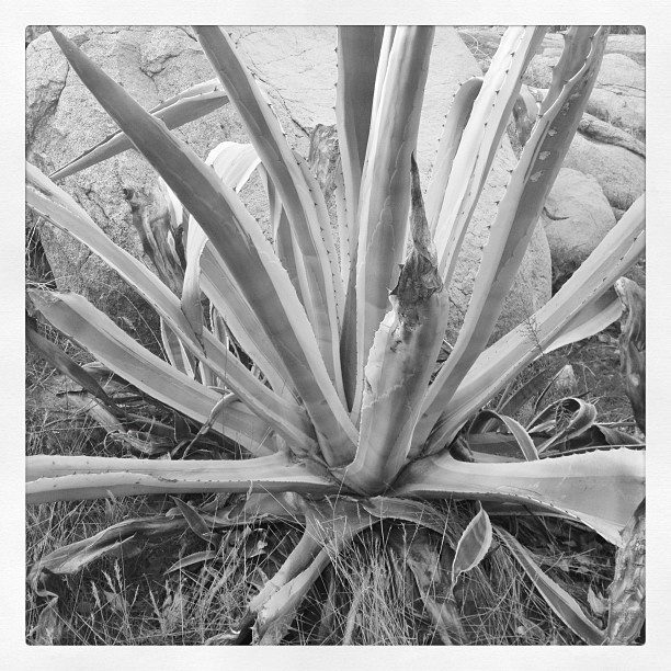 It's Agave: Southern California