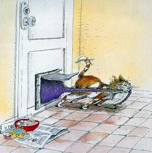 Funny Cats by Gary Patterson