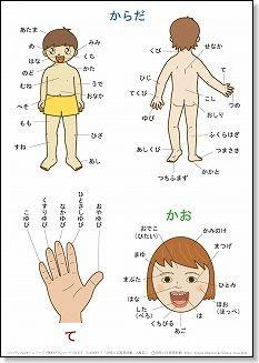 言葉の絵カード「体・顔・手」