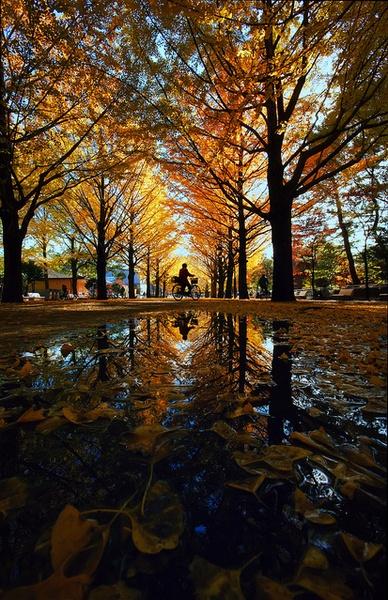 Autumn, Fall Photograph Beautiful leaf color