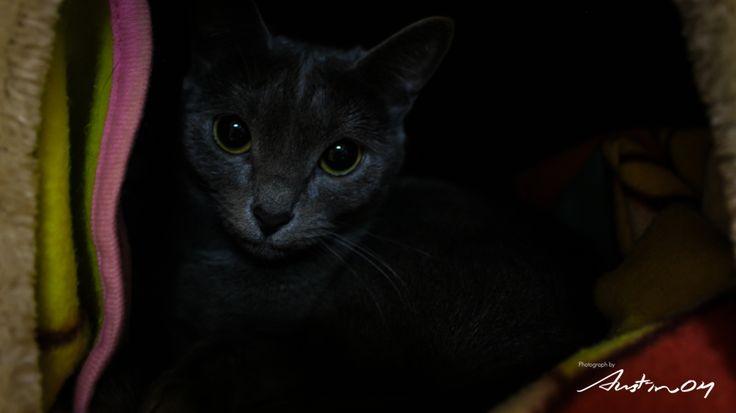 Cat, BORI