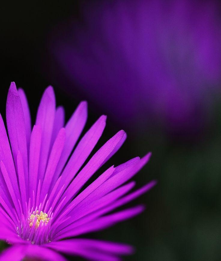 Wildflower by Pieter Oosthuysen, via 500px