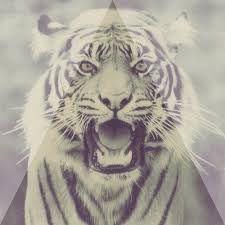 tigre blanquito