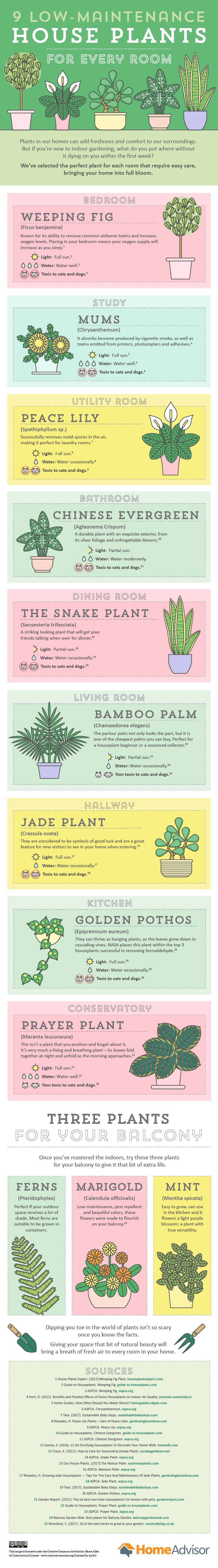 Houseplants are amazing but if you put a plant in the wrong place, it could die. Use this guide to find out which plants should go where in your home.