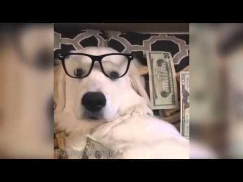 Funny times news: Funny dog vines