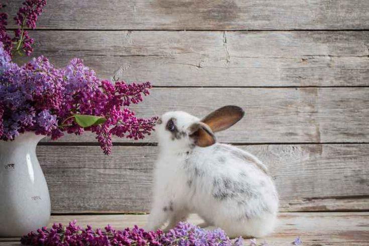 Houseplants Safe For Rabbits The Ultimate List Garden Nook Houseplants Indoor Garden