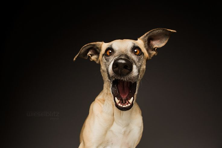 """You are NOT my mother?"" by Elke Vogelsang on 500px"