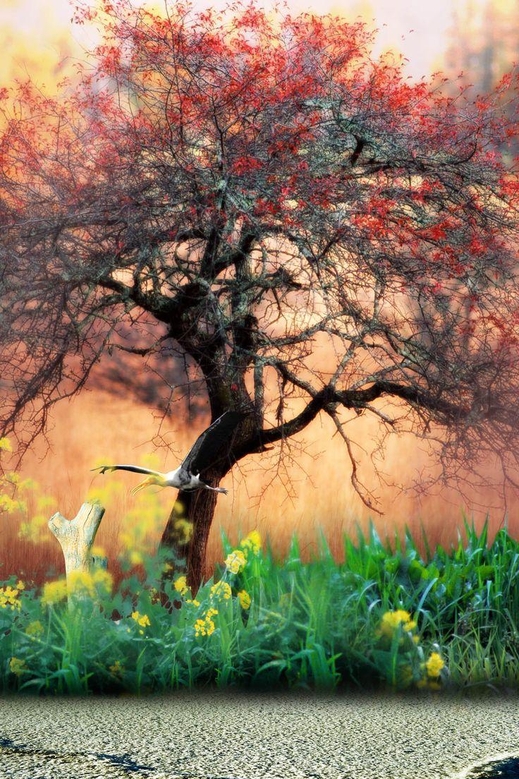 Photo tree by Tharakan Joshy on 500px