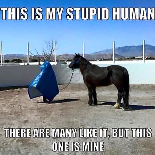 """This is my stupid human. There are many like it, but this one is mine."" #horsememe #horsehumor #stylemyride"