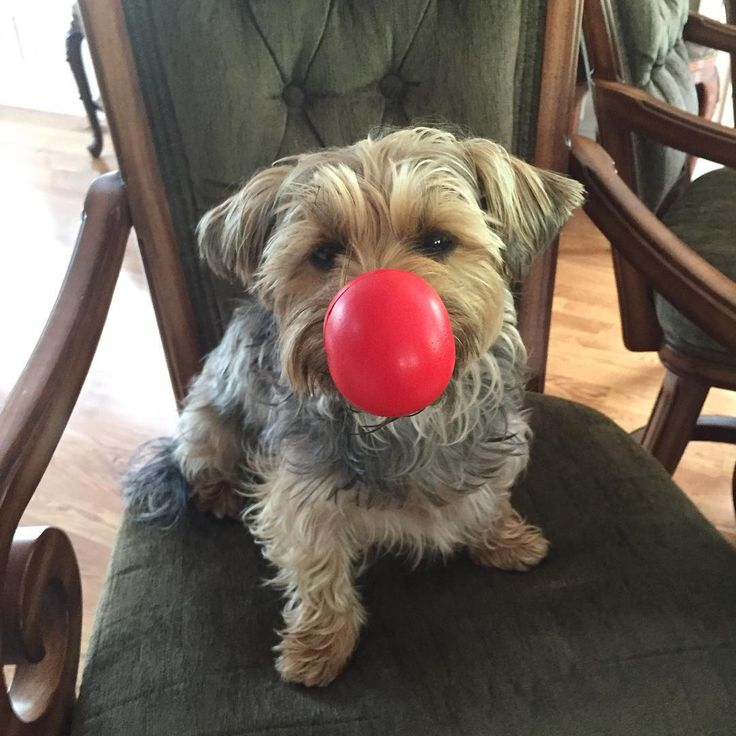This rescue dog has so much to be happy about! A red nose + a happy family. Learn more about Red Nose Day by visiting rednoseday.org. | Red Nose Day USA