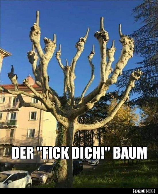 """Der """"fick dich!"""" Baum.."""
