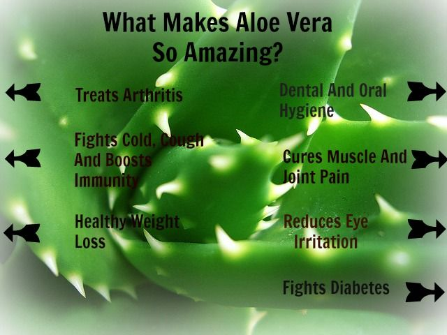 Worshiped as a plant of Immortality by the Egyptians! See what makes Aloe Vera an incredible plant for human body!  ‪#‎aloevera‬ ‪#‎humorganic‬ ‪#‎aloeverabenefits‬