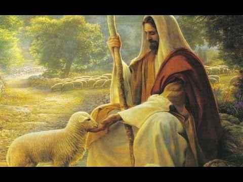 Las ovejas Escuchan al Pastor  | Evangelio El Padrecito