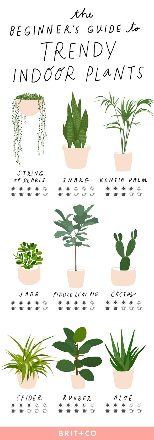 The Beginners Guide to Trendy Indoor Plants via Brit + Co