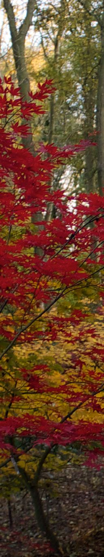 le jardin du vasterival en automne - VASTERIVAL (Varengeville sur mer)