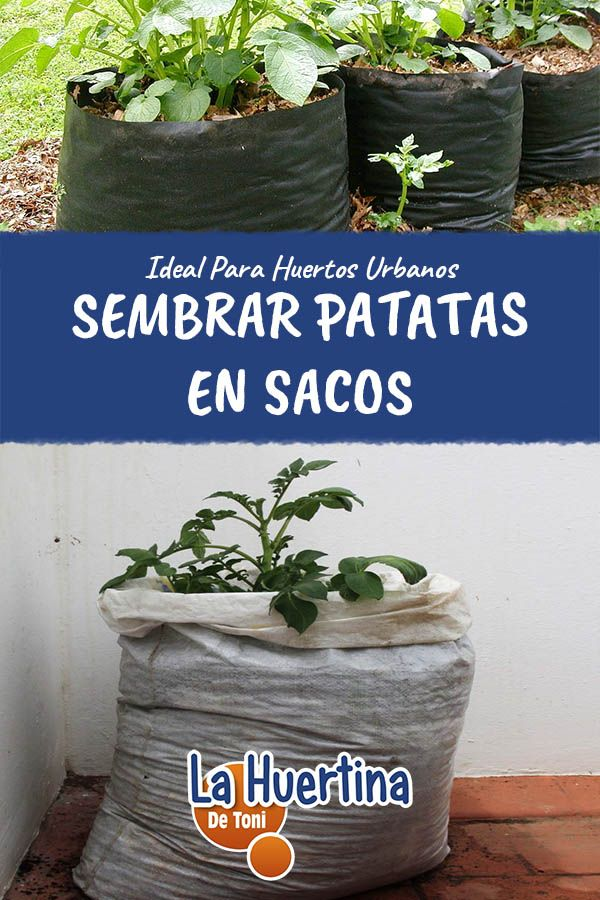 43++ Cultivar patatas en casa ideas