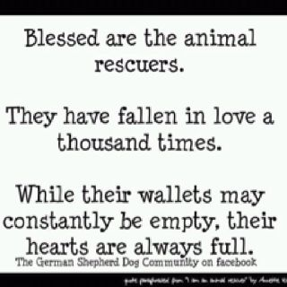 Blessed are the animal rescuers...