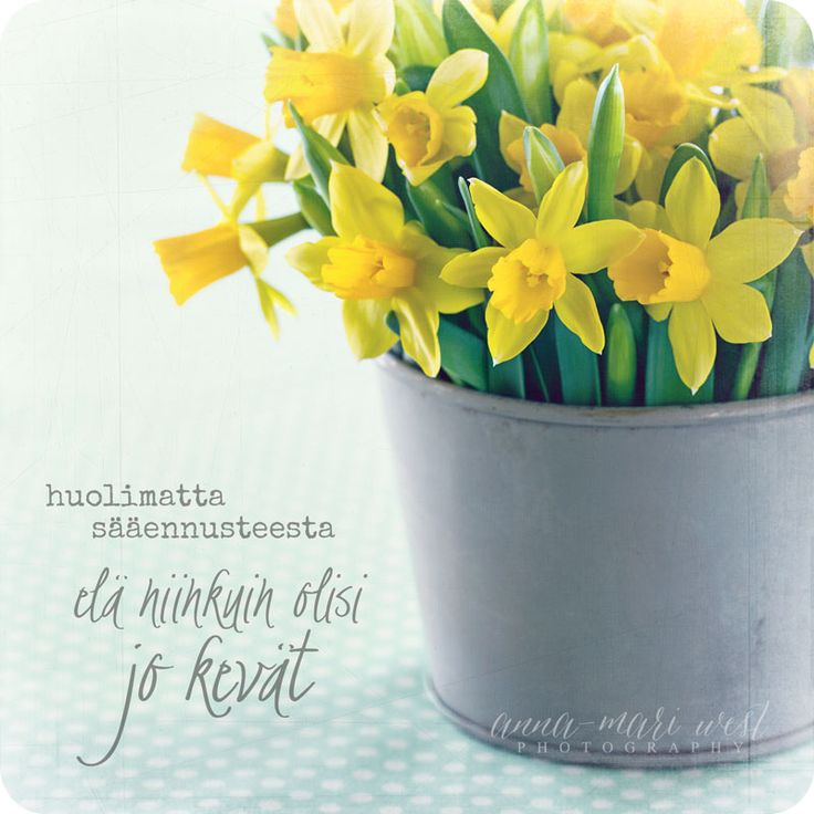 Kevätkortti; Narsissit | Anna-Mari West Photography