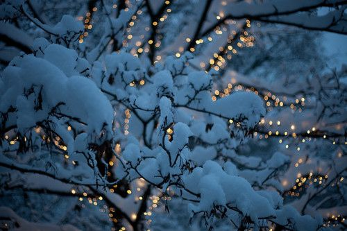 Snowy lights: Christmas Time, Twinkle Lights, White Lights, Night Lights, Winter Wonderland, Christmas Lights, White Christmas, Inspiration Pictures