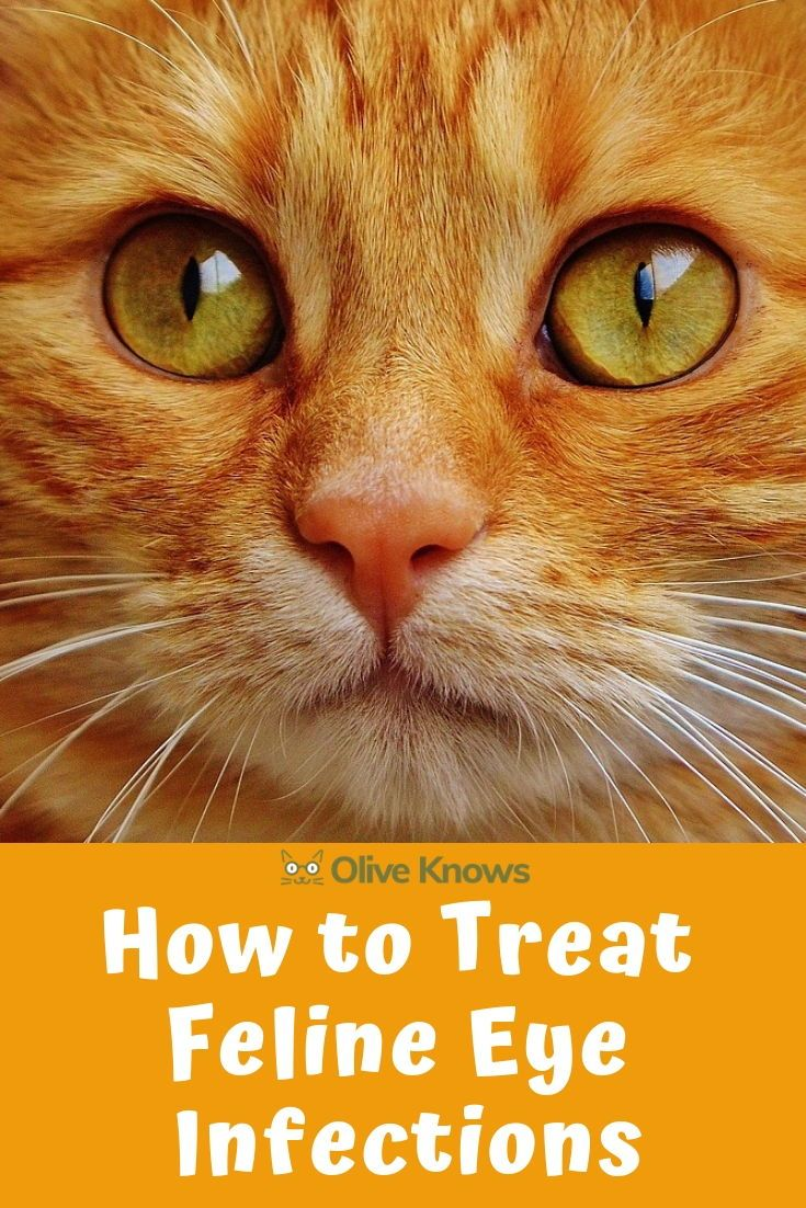 How To Treat Feline Eye Infections Oliveknows Cat Care Cat Eye Infection Cat Parenting